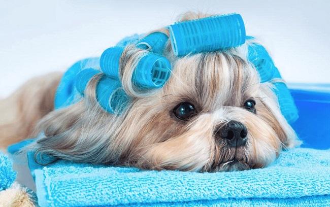 Dịch vụ spa cho thú cưng