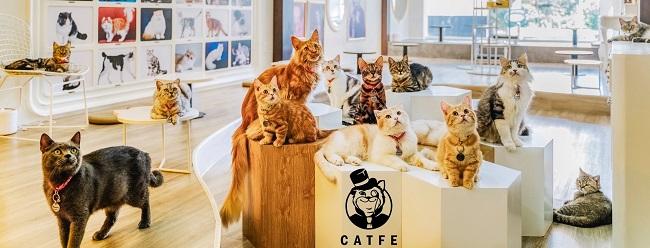 CATFE Coffee