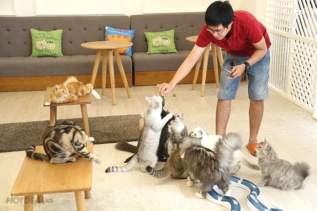 ICHI Cat Café