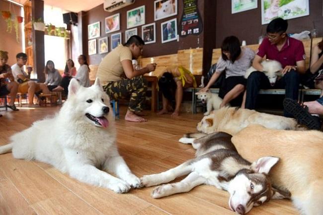 Tokyo Pet Center